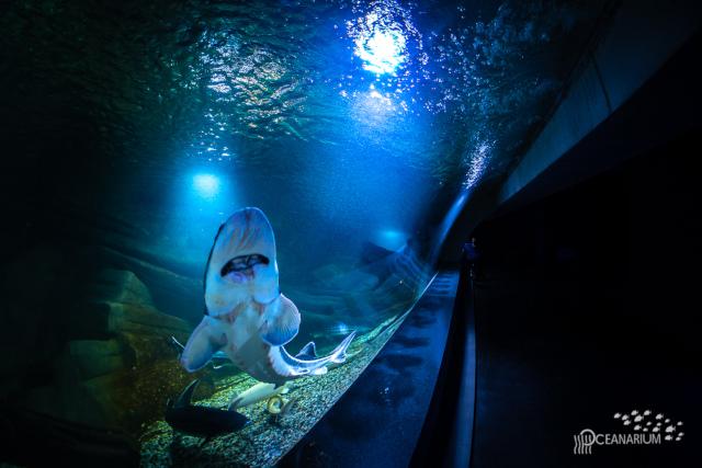 Oceanarium Misdroy / Bild: oceanarium.com.pl